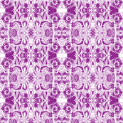 Screaming Purple Cosmos