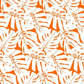 big orange monstera plant