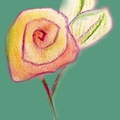 Watercolour Tea Roses