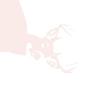 """pale pink buck // 1 yard (42"""" width)"""