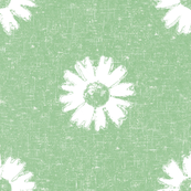 Spring Daisy Grunge