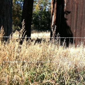 old_barn3