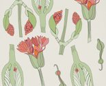 Pattern_marta_s_flower_300_thumb