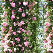 Climbing Roses Fabric & Wallpaper!
