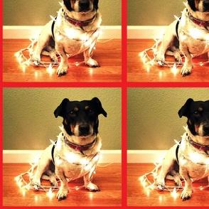 Lights Camera Dog!