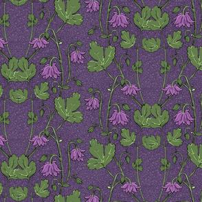 purple columbines