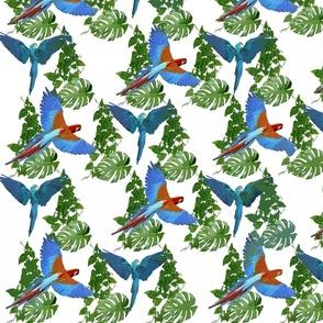 Jungle Birds by Asia Upward
