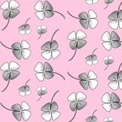 clover pink