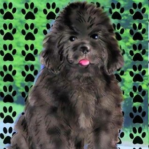 newfoundland puppy and paw prints
