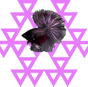 Purple Beta Fish