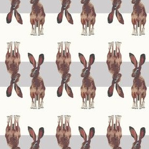 Jackrabbit Bunnies Bunny Rabbit