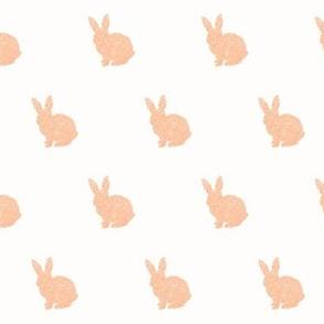 Salmon bunny