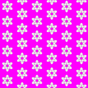 fushia star