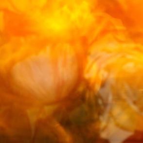 Mystical Roses