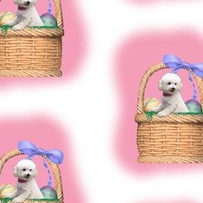 bichon in a basket