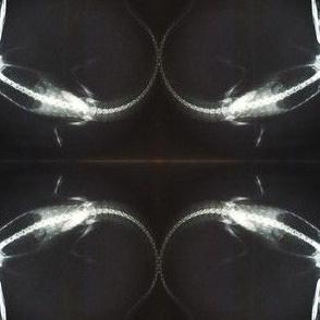 Al E.Gator X-Ray
