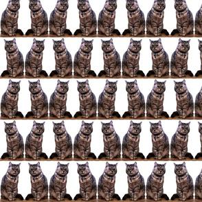 sitting_cat