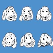 Spoodle faces blue