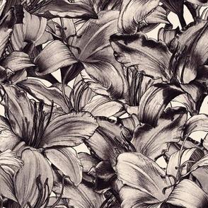 Dazzling Daylilies - monochrome
