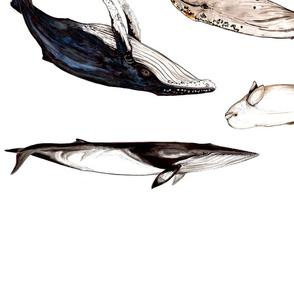 whalesalad