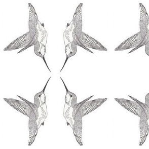 Four Hovering Hummingbirds