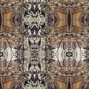honey_locust_thorn_tree