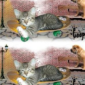 Cat - 001