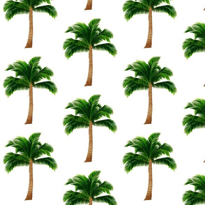 Large Palm Trees