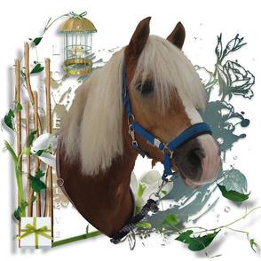 Horse - 001