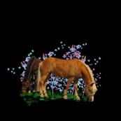 Horse - 003