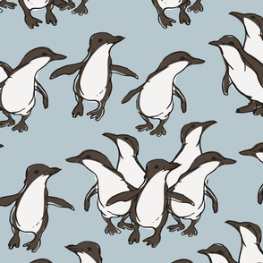 Fairy Penguin Parade