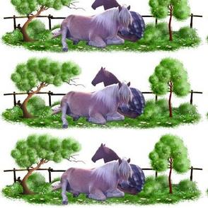Horse - 014