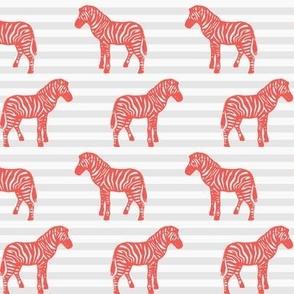 Coral Zebra