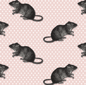 rats on pink dots