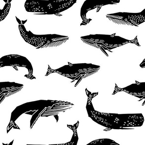 Whales - Black and White by Andrea Lauren