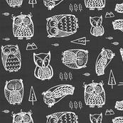 owls on grey