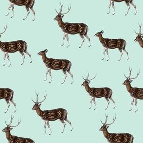 Deer Herd on Seafoam