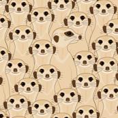 Meerkats - Suricata