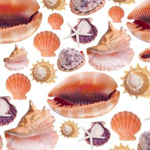 Shelly Sells Sea Shells by the Sea Shore