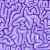 Lavender Brains