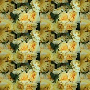 Rose Fluke