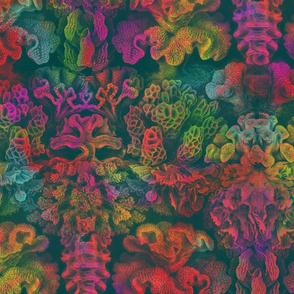 Haeckel Aquatica ~ Coral ~ Oceania
