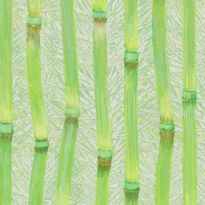 Horsetail fronds green