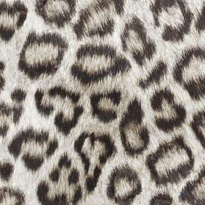 Etosha Snow Leopard