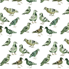 pigeons (medium size)
