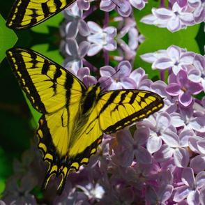 Pollination Series 2 of 3 Panel