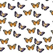Pretty_Butterfly