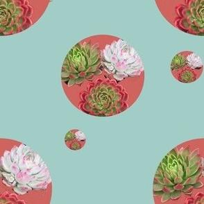 succulent_trio_coral
