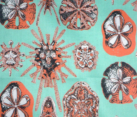 haeckel contest colors