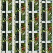 Ivy Flower Boxes